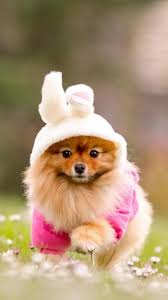 hd pictures of cute animals. Fine Pictures Inside Hd Pictures Of Cute Animals R