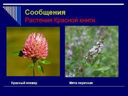 райское настроение реферат о растениях о красной книги казахстана райское настроение