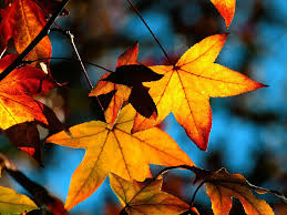 Windows Fall Theme 48 Fall Wallpapers For Windows 7 On Wallpapersafari