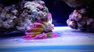 Acquario marino 170 litri in allestimento youtube