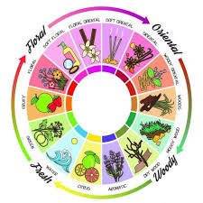 Fragrance Wheel Perfume Classification Chart Fragrance Familes Scent Surreal