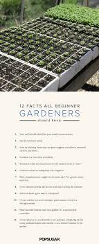 Best 25+ Gardening for beginners ideas on Pinterest   Vegetable ...