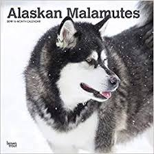 Image result for Malamutes and Eskimo dogs