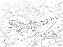 Small Picture Cartoon Axolotl Coloring Sheet Animal Images Of Salamander