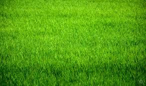 grass. Brilliant Grass Garden Grass Texture  Highquality Free Backgrounds Inside A