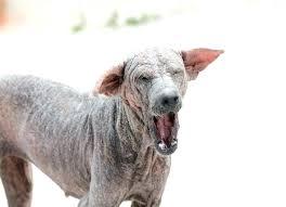 For Dogs Drench Dosage Mange Ivomec Bisongs Co