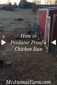 2904 Best Backyard Chickens Images On Pinterest  Chicken Coops How To Keep Backyard Chickens