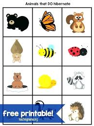 Winter Bear Hibernation Worksheets Preschool Printable Cut And Paste ...