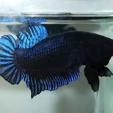 Aurora Fish Farm - Home | Facebook