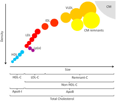 Non Hdl Cholesterol And Apolipoprotein B Compared With Ldl