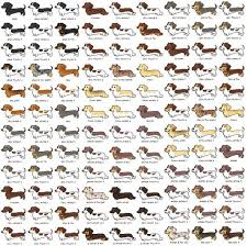 Dachshund Size Chart 12 Facts Dachshund Lovers Know By Heart The Dog People By