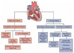 Right Vs Left Sided Heart Failure Chart Left Sided Heart Failure Diagram Cardiac Nursing Icu