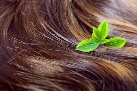 gotu kola hair loss. Contemporary Kola What Is Gotu Kola Throughout Hair Loss E