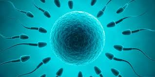 Image result for asexual and sexual reproduction