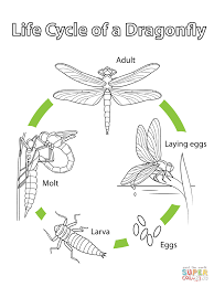 Small Picture Life Cycle of a Dragonfly coloring page Free Printable Coloring
