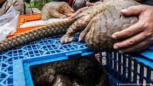 武漢 市場 野生 動物