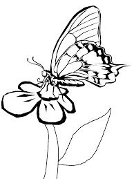 Stampa Colora E Scarica Gratis Immagini E Disegni Di Farfalle