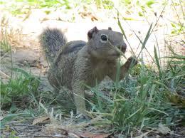 Squirrel Gazer Blog