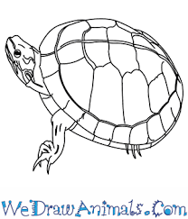 Small Picture How to Draw a Painted Turtle