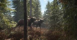 The Hunter Call Of The Wild Tips And Tricks Basics To