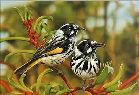 birds wallpaper. Interesting Birds Intended Birds Wallpaper