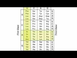 Codon Charts Molecular Genetics