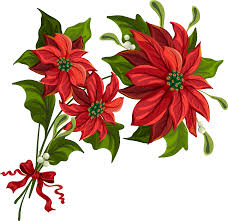 Free Poinsettia Picture Download Free Clip Art Free Clip