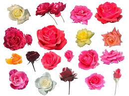 diffe types of flowers colours