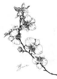 арт для тату орхидея Art рисунки татуировок татуировки и