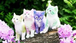 Top 50+ Ảnh Về Con Mèo Đẹp Nhất 2020 ( Bạn Nên Biết )