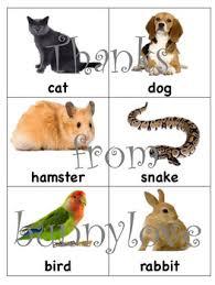 Pet Sort Pet Needs Charts