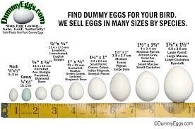 Bird Size Chart Dummy Eggs Blog