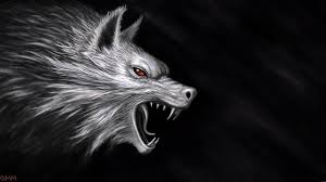 Wolf Wallpapers 4k Hd Wolf Wallpaperspro