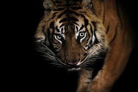 tears of a tiger essay tears of a tiger essay