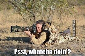 Image result for funny photography memes