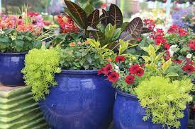 potted plants outdoor large garden pots
