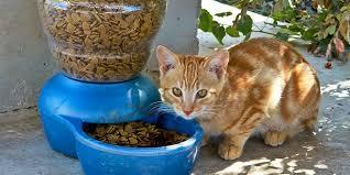 The <b>best cat</b> food in 2019: Ziwi Peak, Acana, Wellness, and more ...