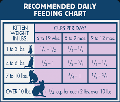 Dog Food Chart By Weight And Age 42 Unbiased Growth Chart For Kittens