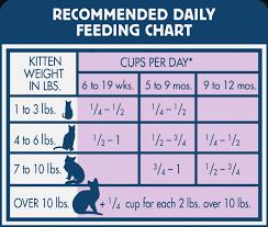 Kitten Feeding Chart 42 Unbiased Growth Chart For Kittens