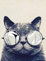 Hipster Cat Phone Wallpapers - Top Free ...