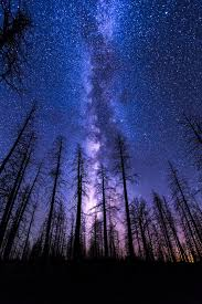 mobile hd wallpapers night sky start forest milkyway violet