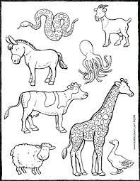 Kleurboek Wilde Dieren Information And Ideas Herz Intakt