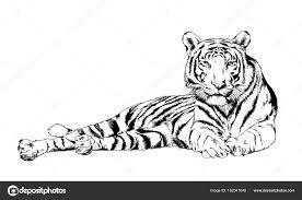 Nakreslen Inkoust Z Rukou Predátor Tetování Tygr Stock Fotografie