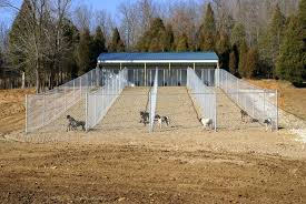 outdoor kennel ideas gorgeous fresh dog kennel flooring ideas home idea for outdoor kennel flooring outdoor