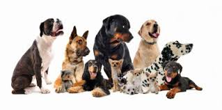 how to use the dog breed selector