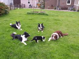 Collie People A Little Whinge Puppy Growth Rates Horse