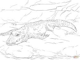 Small Picture Dwarf Crocodile coloring page Free Printable Coloring Pages