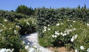 le mas de la brune. Photo Of A Garden And Path Le Mas De La Brune