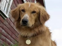 a dog s purpose bailey. Interesting Bailey A Dogu0027s Purpose Purpose Inside Dog S Bailey