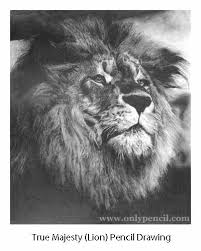 realistic lion face drawing. Fine Drawing Realistic Lion Face Drawing  Photo18 To Lion Face Drawing E